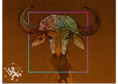 Giraffe with cape buffalo horns on brown background.