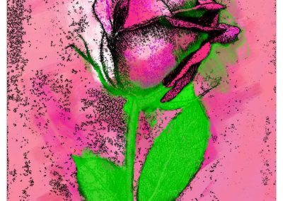 Pink rose with green leaves on pink background.